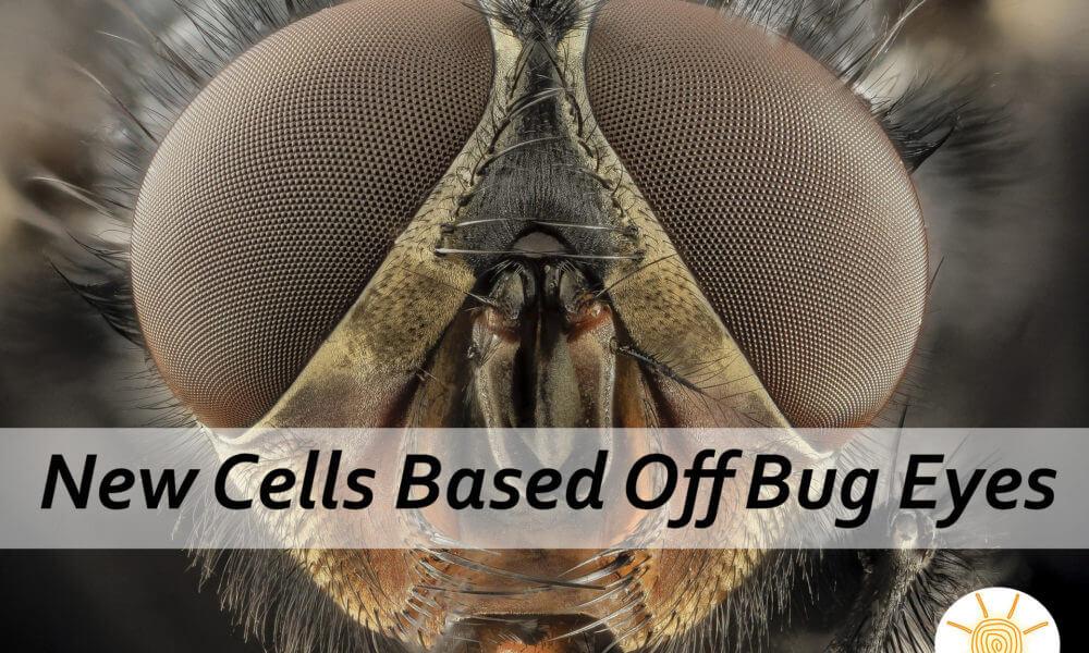 New Solar Cells Designed After Bug Eyes